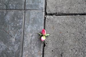 flower thru concrete